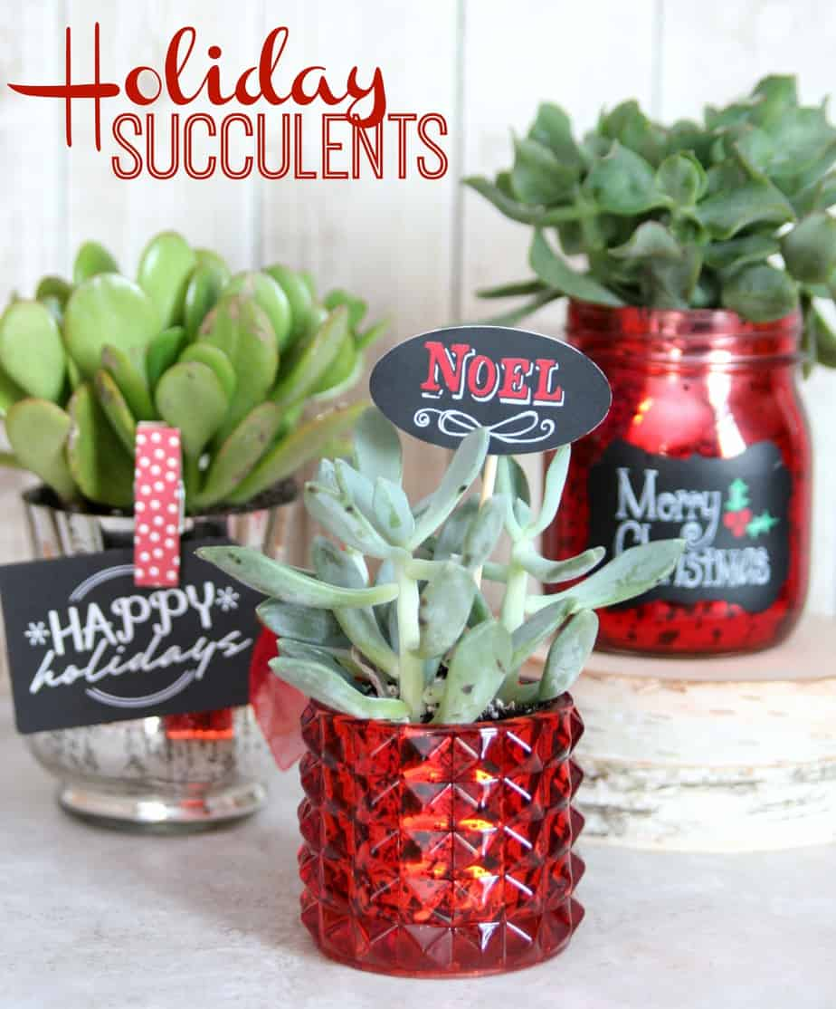 Holiday Succulents