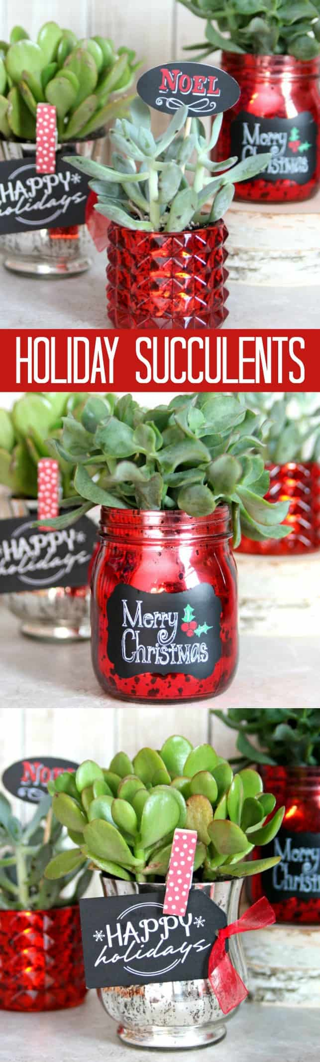 holiday-succulents