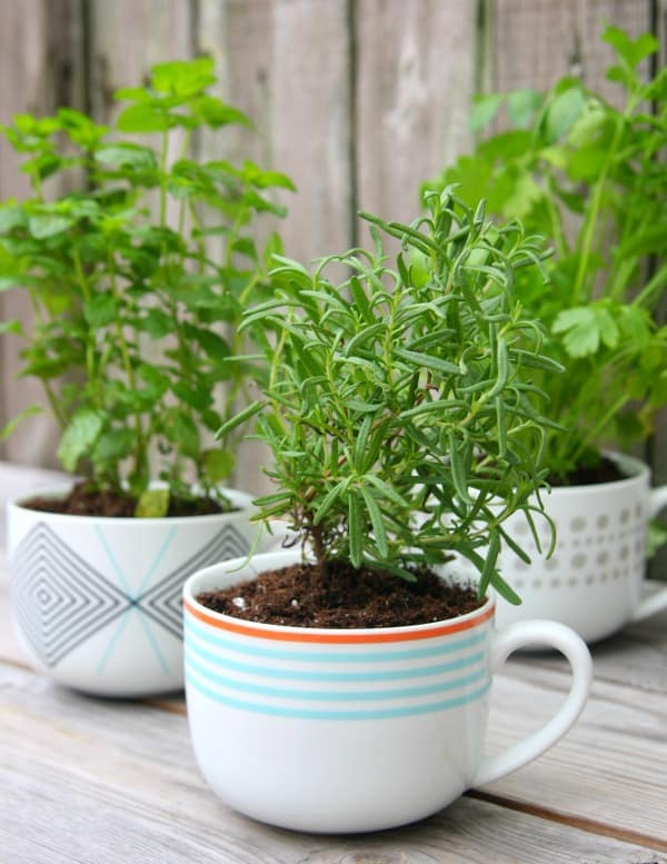 coffee-mug-herb-garden-2