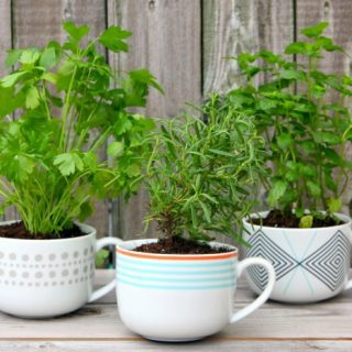 Coffee Mug Herb Planters {Gift Idea}